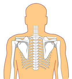 network chiropractic